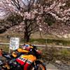 京都の京北、木こりさんのローズカフェ